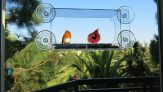 Large Bird Feeder with extra strong Suction Cups – Crystal Clear